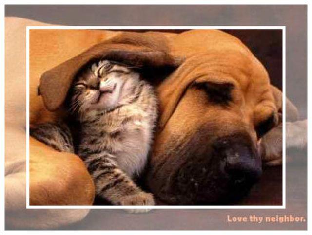 love_thy_neighbor