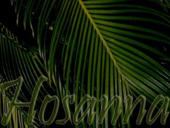 why-are-palm-branches_1396549831