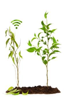plants-wifi