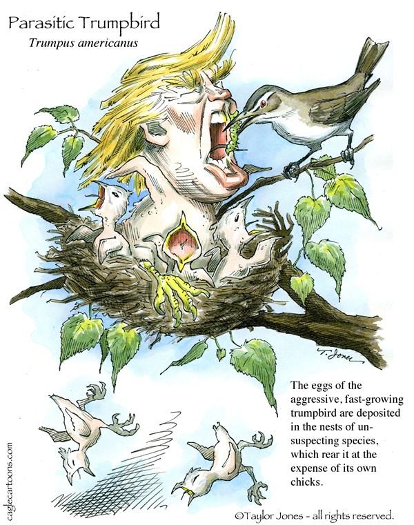 trumpbird 175851_600