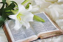 easter-lily-bible-15626790