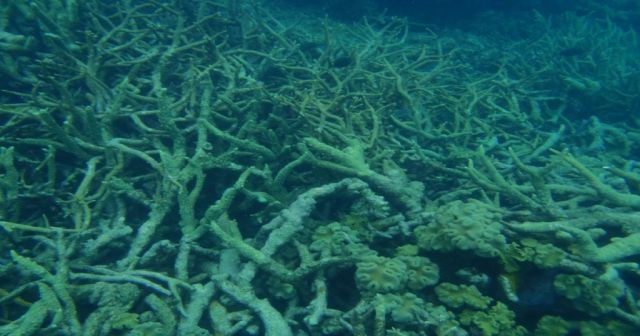 There are a billion reasons to feel optimistic about Australia's Great Barrier Reef.