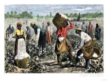 african-american-slaves-picking-cotton